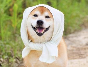 柔軟剤を使わずにタオルをふわふわにする方法